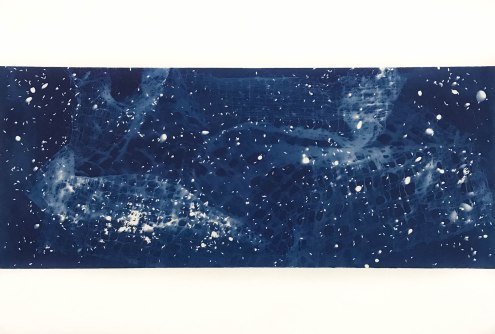 Dragon (VIII), cyanotype on paper, 15x22, 2019