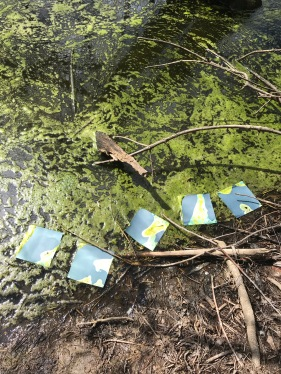 creating in collaboration with blue-green algae